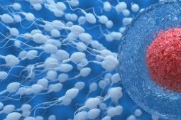 A COVID-19 pode reduzir a qualidade dos espermatozoides?